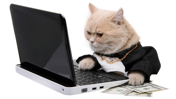 Katės Internetas