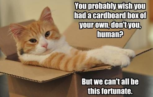 Kačių dėžutė Juokinga