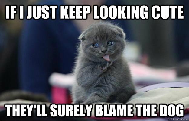 Katinas kaltina šunį juokinga