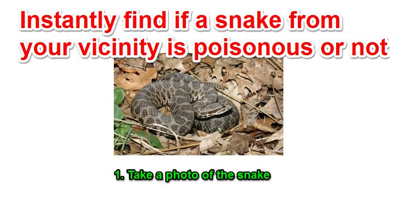 Gyvatės nuotrauka